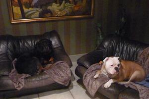 De Vrolijke Woef - Therapiehond